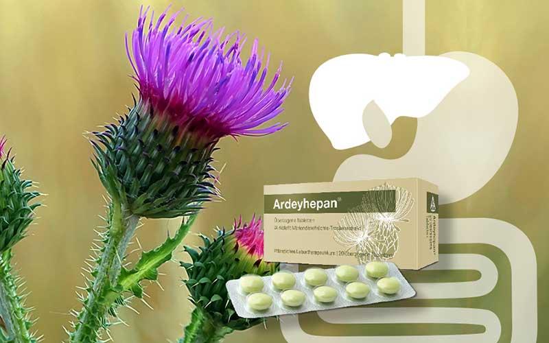 Ardeyhepan® – der bewährte Leberschutz aus der Mariendistel