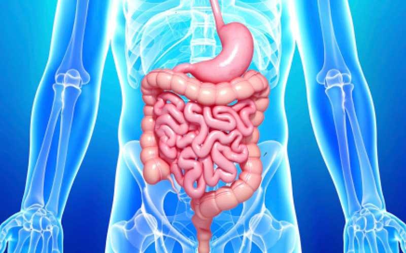 Magen-Darm-Erkrankungen | Meine Gesundheit