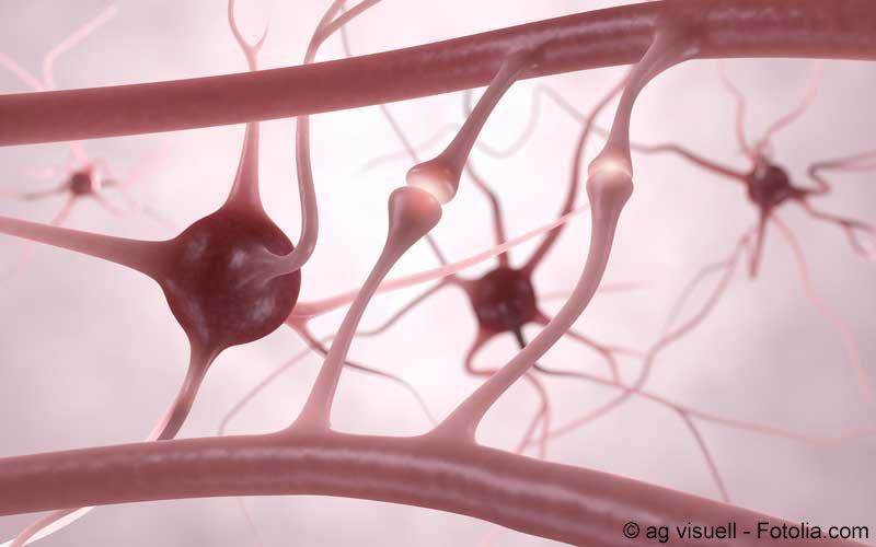 Nervenzellen Abbildung