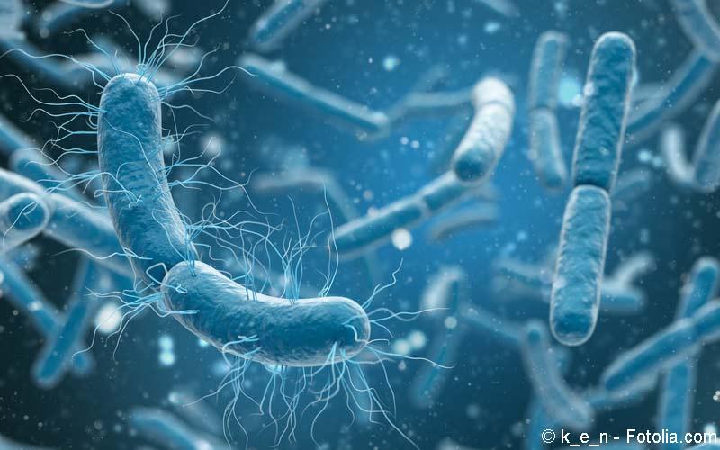 Salmonellen-Bakterien