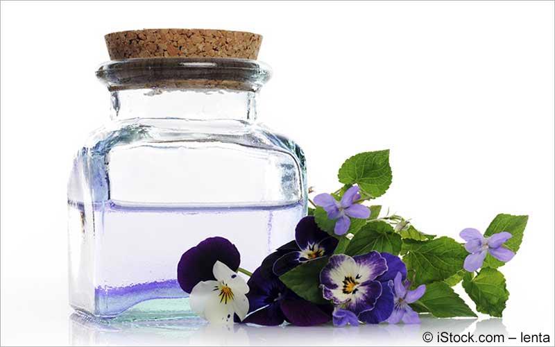 Stiefmütterchen, Wildes Stiefmütterchen (Viola tricoloris)